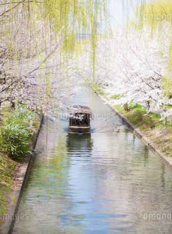 京都伏見の十石舟の写真素材 [FYI03397623]