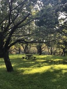 公園のベンチの写真素材 [FYI03397749]
