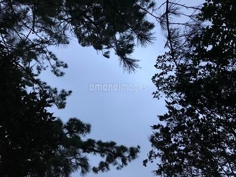 木々から覗く空の写真素材 [FYI03397755]