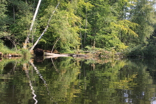 北ドイツ・湖水地方の水路をカヌーでの写真素材 [FYI03397757]