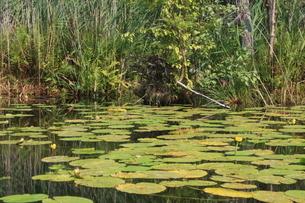 北ドイツ・湖水地方の水路をカヌーでの写真素材 [FYI03397758]