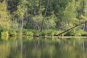 北ドイツ・湖水地方の水路をカヌーでの写真素材 [FYI03397760]