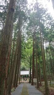 神社の写真素材 [FYI03397761]