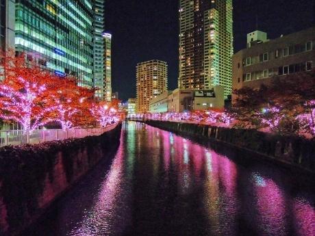 ゲートシティ大崎ライトアップ、目黒川の冬の桜並木の写真素材 [FYI03397764]