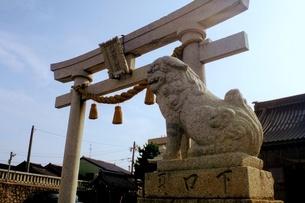 諏訪神社の鳥居と狛犬の写真素材 [FYI03397765]