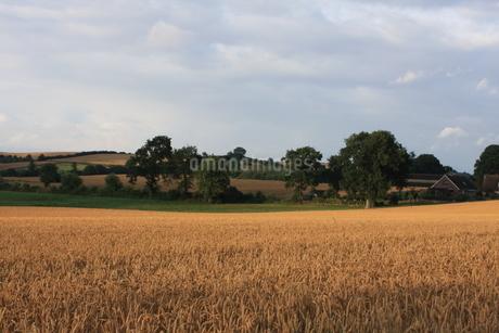 北ドイツ・農地の写真素材 [FYI03397787]