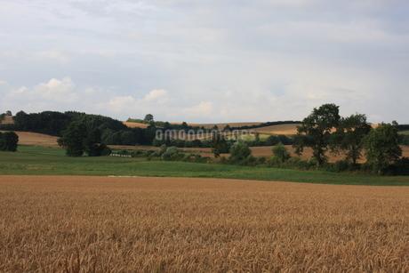 北ドイツ・農地の写真素材 [FYI03397789]