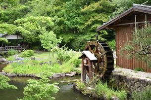 和の庭園の写真素材 [FYI03398015]