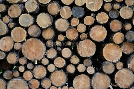 材木の写真素材 [FYI03398259]