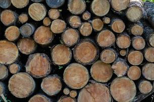 材木の写真素材 [FYI03398260]