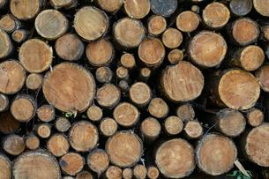 材木の写真素材 [FYI03398261]
