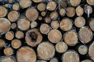 材木の写真素材 [FYI03398263]