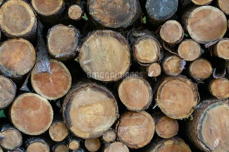 材木の写真素材 [FYI03398264]