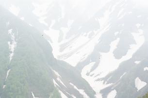 風に浮かぶ鳥  霞む鳥海山  mt.choukaisan, bird flying, japanの写真素材 [FYI03398482]