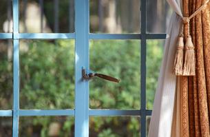 晴れた日の部屋の窓とカーテンの写真素材 [FYI03398504]