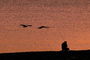夕暮れの中の釣り人と鳥 日本 静岡県 焼津市の写真素材 [FYI03398588]