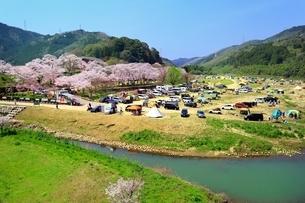 笠置山自然公園 笠置キャンプ場と桜の写真素材 [FYI03398830]
