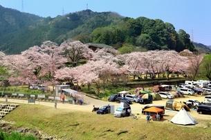 笠置山自然公園 笠置キャンプ場と桜の写真素材 [FYI03398831]