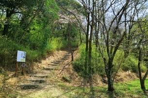 西乗鞍古墳公園の桜の写真素材 [FYI03398862]
