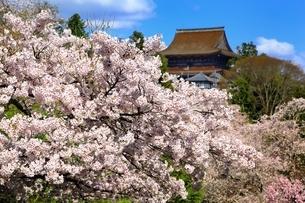 吉野山の桜の写真素材 [FYI03398900]