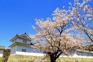 彦根城の桜の写真素材 [FYI03399000]