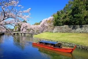 彦根城の桜の写真素材 [FYI03399003]