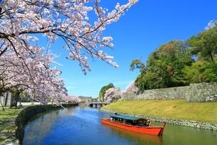 彦根城の桜の写真素材 [FYI03399012]
