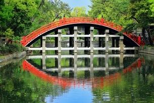 住吉大社 反橋の写真素材 [FYI03399071]
