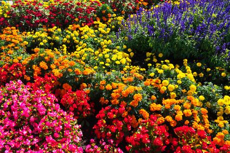 花畑の写真素材 [FYI03399260]