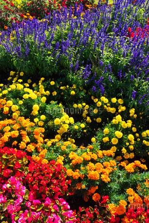 花畑の写真素材 [FYI03399261]