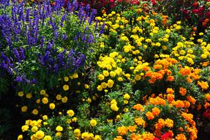 花畑の写真素材 [FYI03399263]