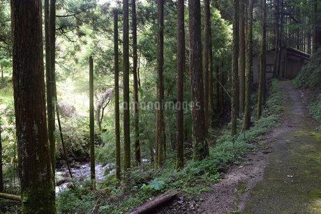 山道の写真素材 [FYI03399459]