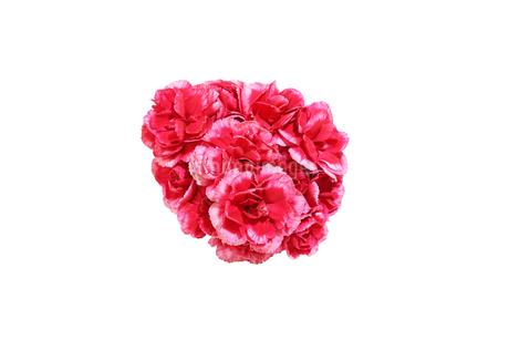 カーネーションの花束の写真素材 [FYI03399741]