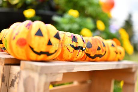 ハロウィンのかぼちゃの写真素材 [FYI03399761]