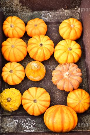 ハロウィンのかぼちゃの写真素材 [FYI03399764]