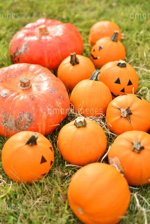 ハロウィンのかぼちゃの写真素材 [FYI03399766]