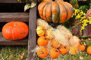 ハロウィンのかぼちゃの写真素材 [FYI03399768]