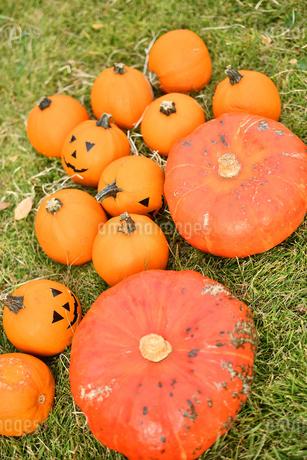 ハロウィンのかぼちゃの写真素材 [FYI03399769]
