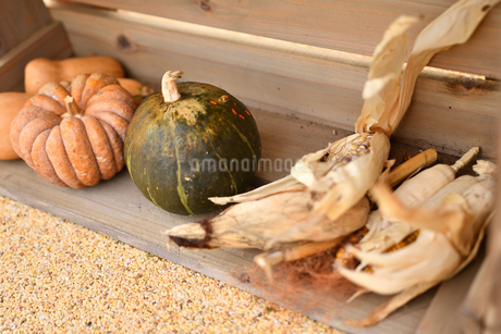 ハロウィンのかぼちゃの写真素材 [FYI03399770]