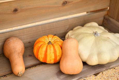 ハロウィンのかぼちゃの写真素材 [FYI03399771]