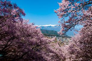 桜満開の高遠城跡公園より高遠の街並みと中央アルプスを望むの写真素材 [FYI03399831]