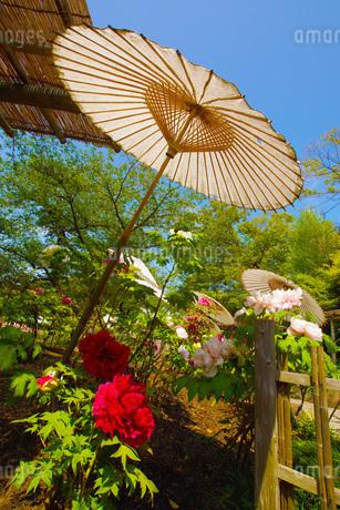 和傘・牡丹がある風景の写真素材 [FYI03399855]