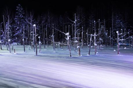 ライトアップされた冬の湖 美瑛町青い池の写真素材 [FYI03399889]
