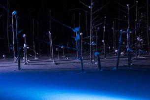 ライトアップされた冬の湖 美瑛町青い池の写真素材 [FYI03399890]