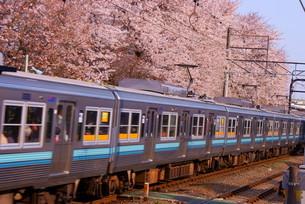 桜と京王井の頭線の写真素材 [FYI03399915]