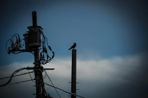 烏と電柱のシルエットの写真素材 [FYI03399918]