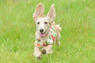 飛ぶ犬の写真素材 [FYI03399940]