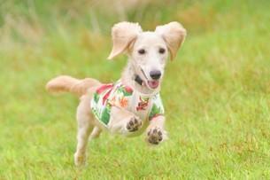 飛ぶ犬の写真素材 [FYI03399941]
