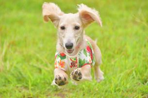飛ぶ犬の写真素材 [FYI03399943]