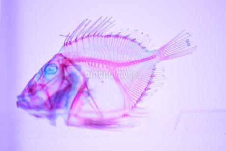 透明標本の写真素材 [FYI03399949]